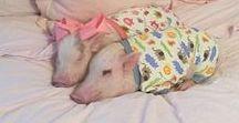 schweinchen / German: piglet - Inspired by Tena ♥ ♥