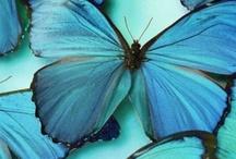 Feeling Blue / by Amy Johnstone
