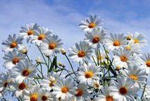 Daisy Chain / by Amy Johnstone