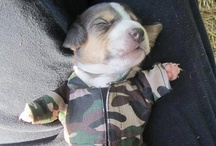 Awwww Dogs / These will make you go awwww! / by I Love Funny Dogs