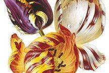 FLOWERS - ART / Flower Artists