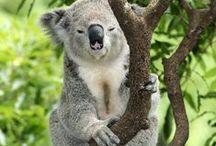 Aussie Nature