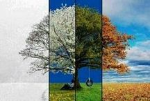 Four Seasons / by Amy Johnstone