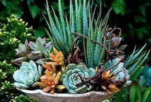 Trädgård/blommor