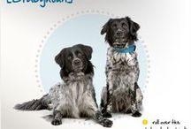 Dog breeds / by Greenbriar Pet Hospital and Luxury Resort