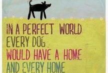 Dog posters / plakaty