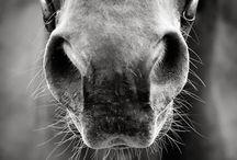Equestrian Beauty / Equestrian