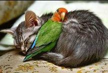 unlikely friendships / unlikely friendships