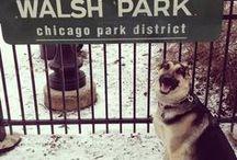 wybiegi dla psów / dog parks