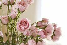 ROSE, ROSE / by BRITT LUNDQUIST
