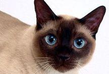 CICA / Minden ami a cicákról szól