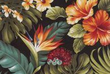 Ilustracion botánica