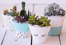 PLANTS / Plants & Flowers for happy homes. Get that fresh oxygen in ya!