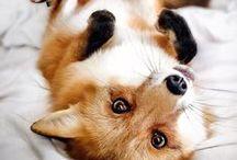 Fox photographs