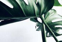 PLANTS |