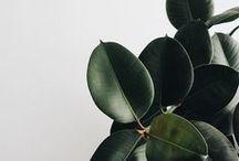 greenery. / #plants #indoorplants #homeplants #interiordesign