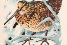 ..AVES BOSQUE. Woodland birds / ISLAS CANARIAS