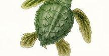 Tortugas marinas ISLAS CANARIAS/