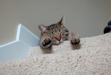 Cat Lady / Yes, I am a cat lady.