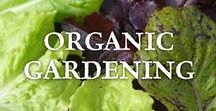 Organic Gardening / All about organic gardening including, vegetable gardening, growing herbs, and beautiful flowers to attract pollinators.