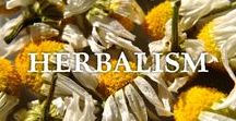 Medicinal Herbs & Remedies / A collection of articles about cultivating medicinal herbs, herbalism or herbal medicine, the healing properties of different herbs, growing medicinal herbs, natural remedies, creating tinctures, teas, and salves.