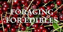 ~ Foraging for Edibles ~ / Foraging for edibles is a great way to experience the natural world and abundance of wild foods growing around us. Some of the foods we think of as weeds are filled with nutrients and vitamins.