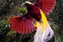 Bird Page / Colourful birds
