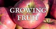 Growing Fruit / Advice on growing your own fruit, from tree fruits like apples, pears, and cherries to bushes and cane fruits like strawberries, blueberries, and raspberries, to tender fruits like grapes, citrus and peaches.