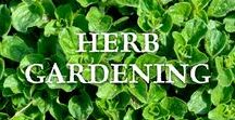 Herb Gardening / Tips on growing herbs in the garden or in containers including the classic culinary herbs such as basil, rosemary, mint, and thyme, along with medicinal herbs, and herbs for tea.