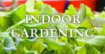 Indoor Gardening / All about growing food indoors including herbs, vegetables, fruits, salad greens, sprouts, re-growing from store bought, and other creative ways of growing edibles inside.