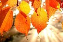 Vive l'automne! / Bricolages, cuisine et activités autour de la thématique de l'automne.