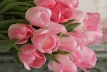 Pink Tulip cottage