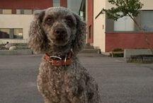 Koirani Linda / Kuvia Koirastani
