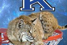 kentucky wildcats / by Faye Rickard