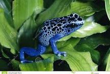 Frogs / colorful and beautiful