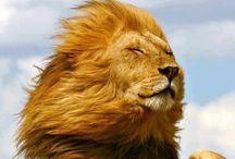 Animalia / Animales Bonitos, feos, graciosos, simpáticos, salvajes, caseros... Animaes-Animals