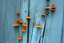 Fungi / Interesting sometimes but also deadly