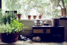 Home | Indoor Plants