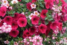 Garden of the Year / Tips for flower gardening and landscaping with an emphasis on container gardening.