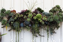 Plants, planters and Pots / Ways to showcase plants,  what to use, and how to do it.  / by Barbara MacKellar