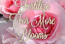 Rose Care / Articles and videos to treat and prevent rose disease.