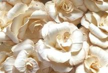 Paper Flowers / Inspiration for our Paper Flowers Workshop on March 20