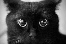 I Love Cats / I gatti, animali meravigliosi...