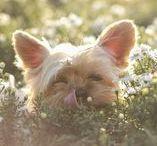 Nährstoffe für Hunde