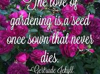 Rose Gardening Motivation / Little things to keep your love for roses alive!