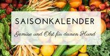 Saisonkalender Gemüse und Obst für den Hund / Gemüse und Obst der Saison, Kochen für den Hund nach Jahreszeiten, Gemüse und Obst aus der Region