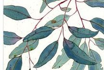 Botanical/Illustration