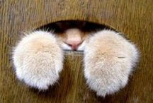 Chats & cats / Chats & cats