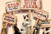 Flea and Tick Prevention / Flea and Tick Prevention