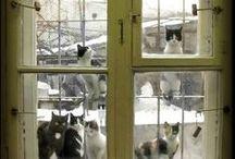 okno a kočičky